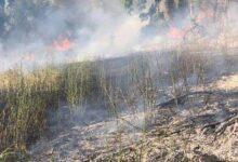 Photo of Emergenza incendi nel salernitano: agricoltori pronti ad aiutare i comuni