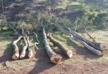 Photo of Montesano: taglio abusivo di bosco, scatta la denuncia