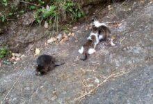 Photo of Vallo della Lucania: rinvenuti cuccioli di gatti abbandonati in un sacco