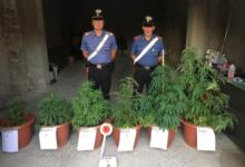 Photo of Perdifumo: studente coltivava piante di marijuana, scatta il sequestro