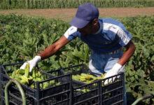 Photo of Coronavirus, nuove prescrizioni in Campania per aziende agricole