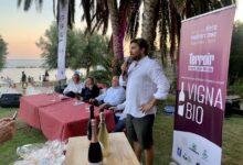 Photo of Pioppi, Premio Vigna Bio: i vincitori dell'edizione 2020