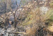 Photo of Ancora un incendio nel Vallo di Diano