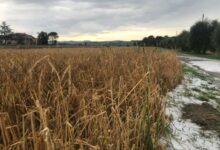 Photo of Coldiretti lancia l'allarme per l'agricoltura