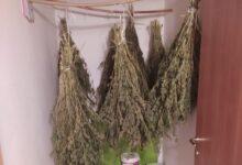 Photo of Sequestrati 10 kg di marijuana nel salernitano