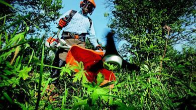 Photo of Ogliastro Cilento: percettori del reddito di cittadinanza al lavoro per la comunità