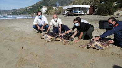 Photo of Acciaroli: liberate tre tartarughe caretta caretta